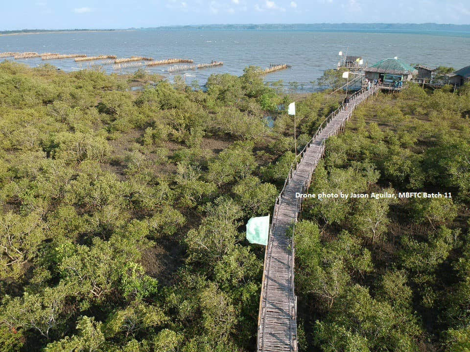 Globe, ZSL Philippines partner on mangrove protection for climate resilient coastal communities