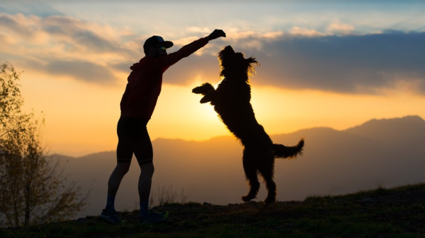 5 fun activities you can do with your doggos at home this summer