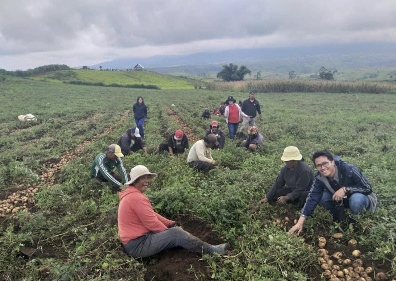 Livelihood through potato farming: How farmers overcome pandemic challenges
